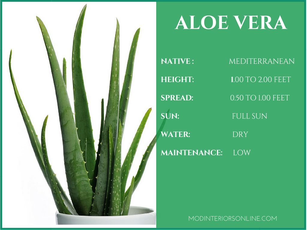 Best-Indoor-plants-Houseplants-Your-Home Clean-Air Healthy-Living-Purified Air-Healthy Living-VOCs- Snake Plant- Golden Pothos- Peace Lily- Bamboo Palm- Aloe Vera