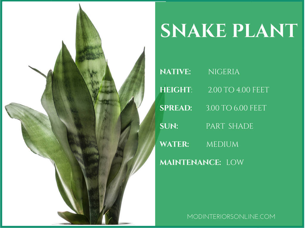 Best Houseplants For Your Home Promoting Clean Air And