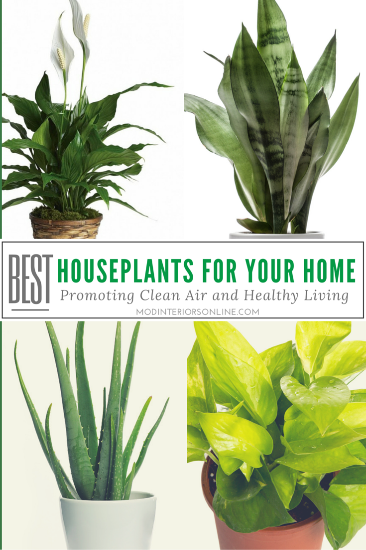 Best Indoor Plants Houseplants Your Home Clean Air Healthy
